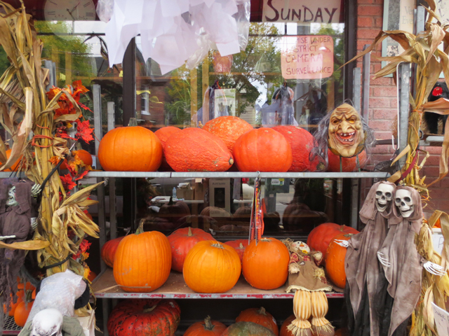 pumpkins and halloween decor at east end garden centre queen street east toronto