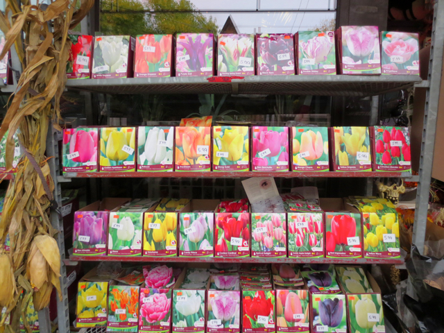 tulip bulbs large variety at east end garden centre queen street east toronto