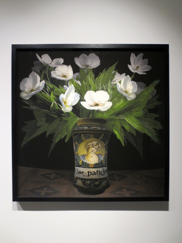 anemone canadensis in an italian pharmaceutical vessel lens based digital painting by tm glass toronto onsite gallery