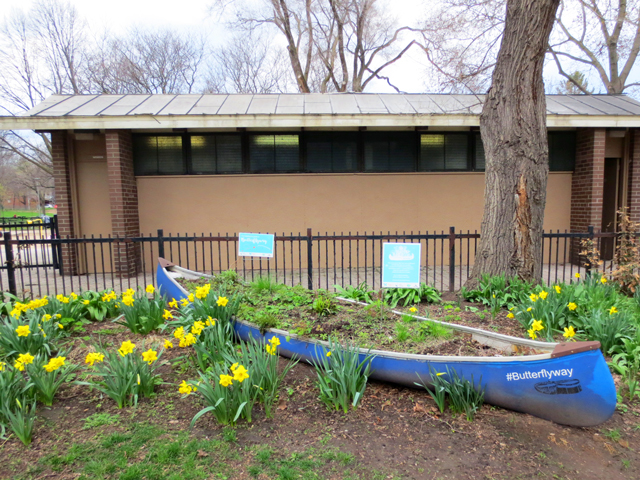canoe planted with native flowers for bees and butterflies butterflyway david suzuki foundation toronto