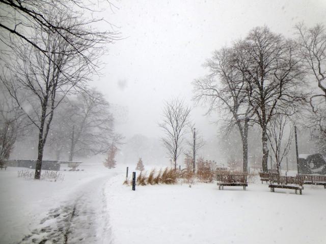 snowstorm in toronto blizzard grange park february