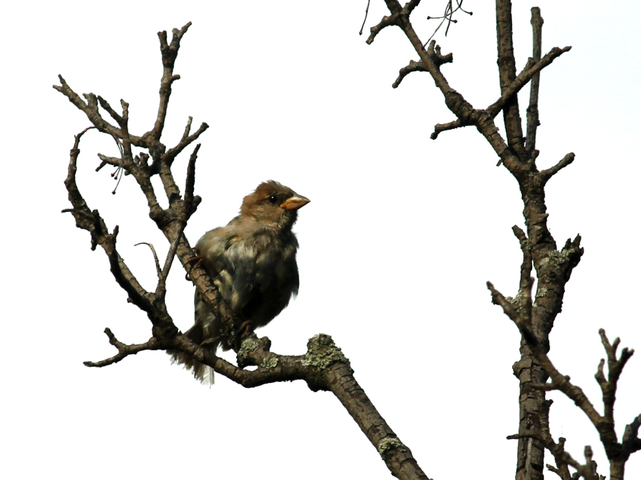 baby sparrow in toronto